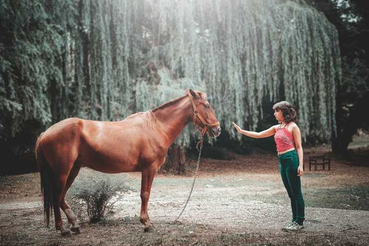 Essay on Horse for School Kids & Students in English | Horse