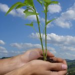 Essay on World Environment Day in English for School Kids & Students