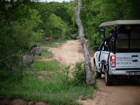 Game Drive particular no Phelwana Game Lodge, África do Sul
