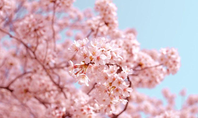 quali sono i migliori profumi giapponesi le essenze