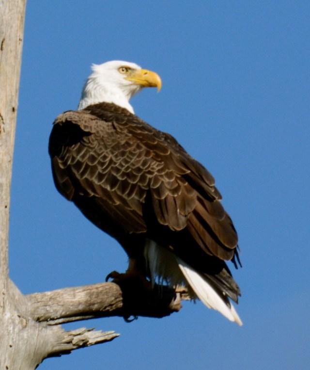 eagle circle b