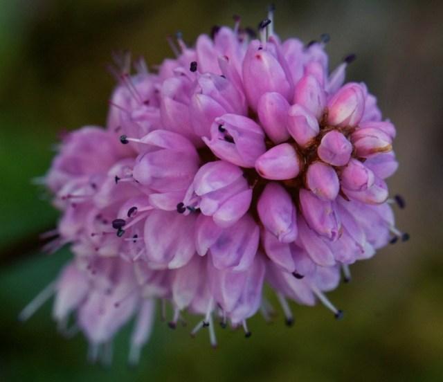pink bell_Fotor