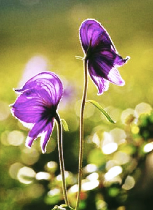 wildflower_Fotor
