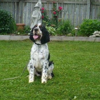 Passive Alert Drug Dog