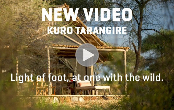 kuro-tarangire-video-release.jpg?mode=max&width=600