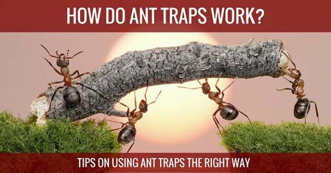 Amdro Kills Ants Liquid Ant Killer Bait Stations 6 Pack
