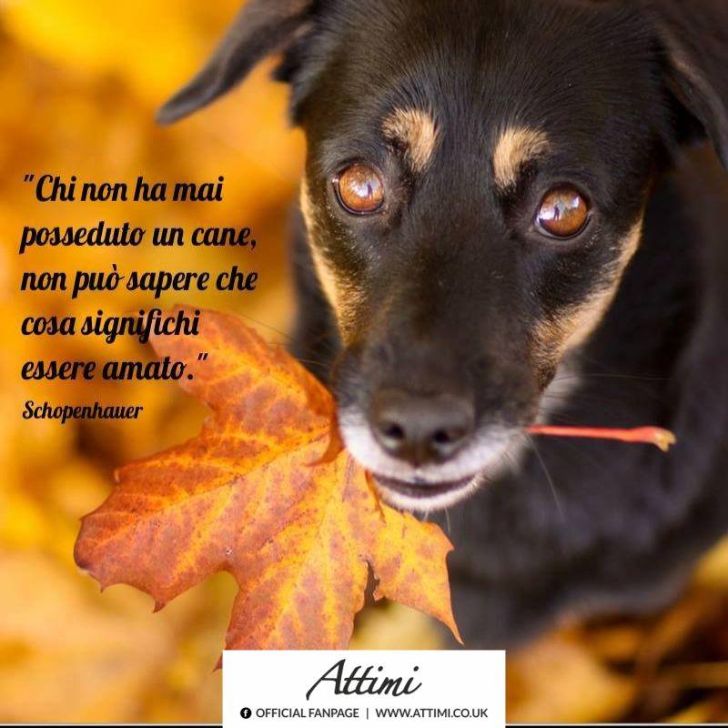 Chi non ha mai posseduto un cane, non può sapere che cosa significhi essere amato. ( Shopenhauer )