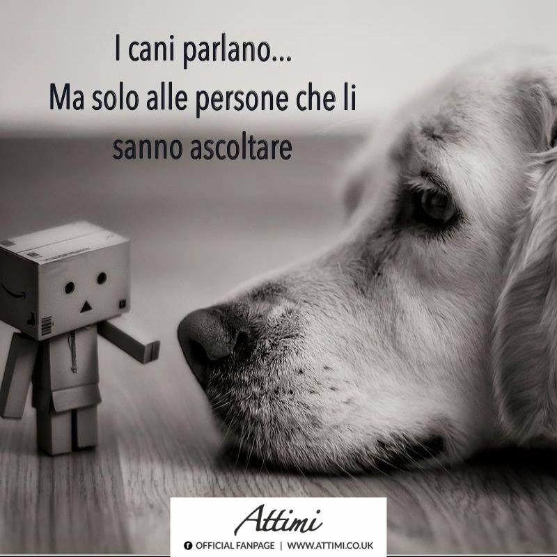 I cani parlano… Ma solo alle persone che li sanno ascoltare.