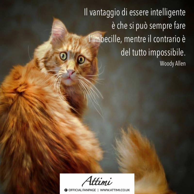 Il vantaggio di essere intelligenti è che può sempre fare l'imbecille, mentre il contrario è del tutto impossibile. ( W. Allen )