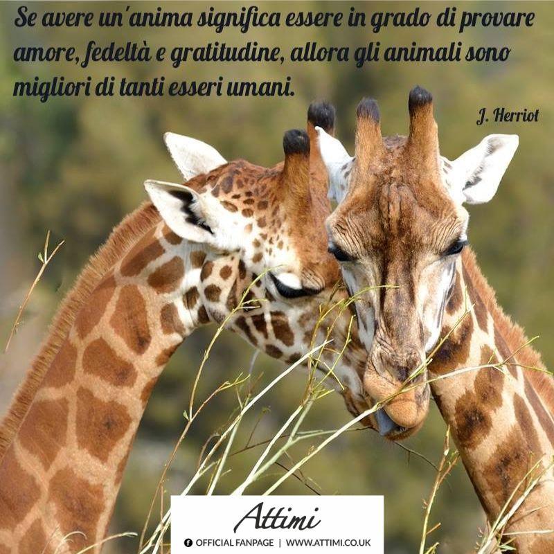 Se avere un'anima significa essere in grado di provare, fedeltà e gratitudine, allora gli animali sono migliori di tanti esseri umani.