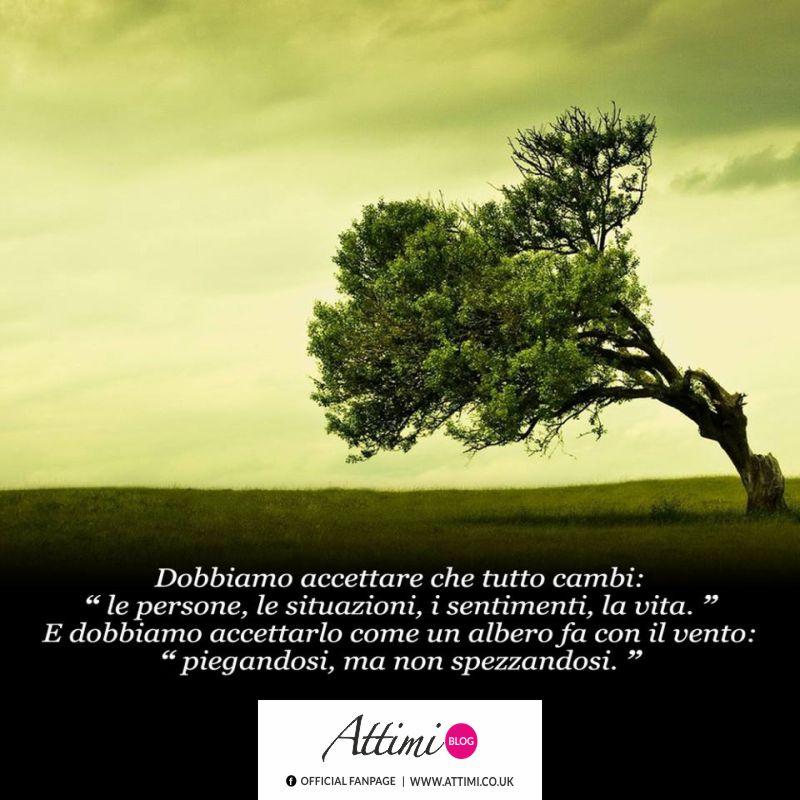 """Dobbiamo accettare che tutto cambi """"le persone, le situazioni, i sentimenti, la vita."""" E dobbiamo accettarlo come un albero fa con il vento: """"piegandosi, ma non spezzandosi."""""""