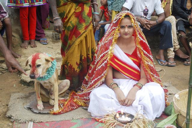 Ragazza sposa cane randagio, contro la sfortuna