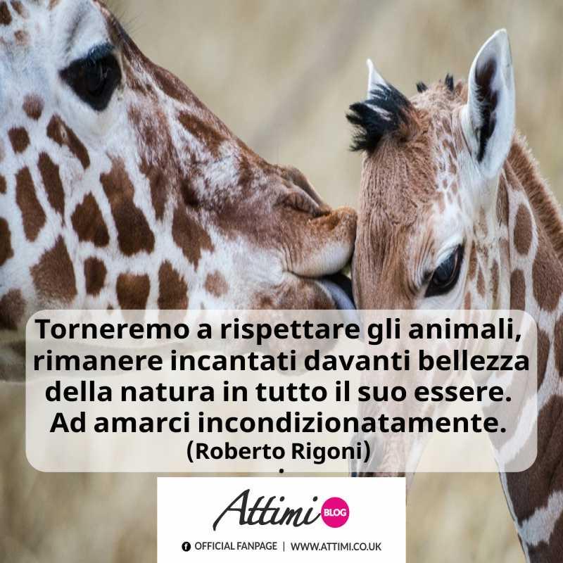 Torneremo a rispettare gli animali, a rimanere incantati davanti bellezza della natura in tutto il suo essere. (Roberto Rigoni)