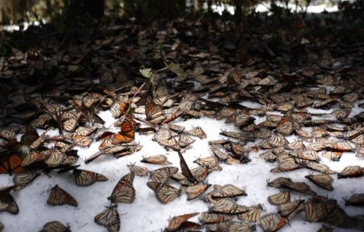 mariposas-610x389