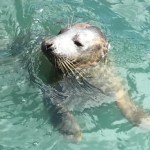 EXPIRED:Scarborough SEA LIFE Sanctuary – Free Annual Pass
