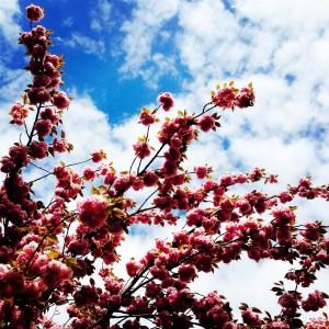 Spring by Ute Wieczorek-King