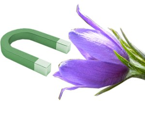 Magnet flower