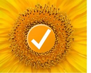 Tick sunflower