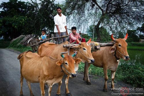 village voice,village love story,