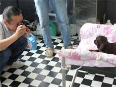 子犬撮影風景