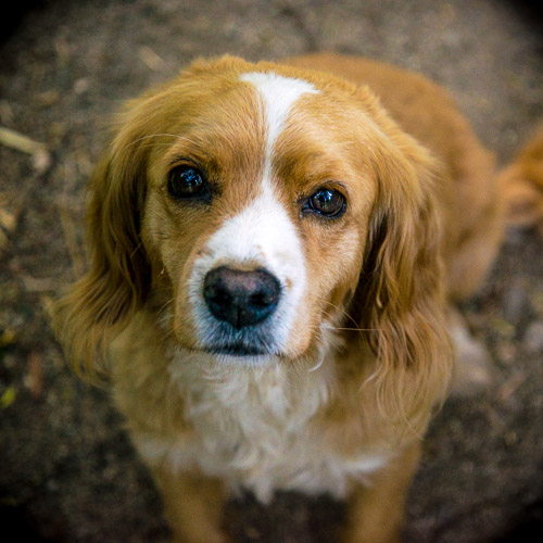 S'abonner sauve des petits chiens des rues