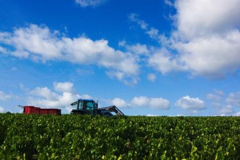 le tracteur dans les vignes indiquent la fin de notre ligne, vendanges dans le beaujolais, Odenas
