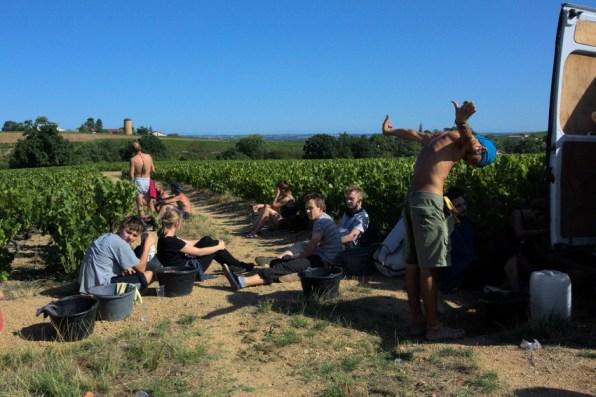 Pause de l'après-midi dans les vignes
