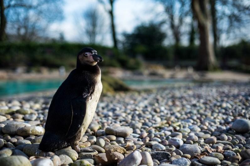 london_pass_london_zoo