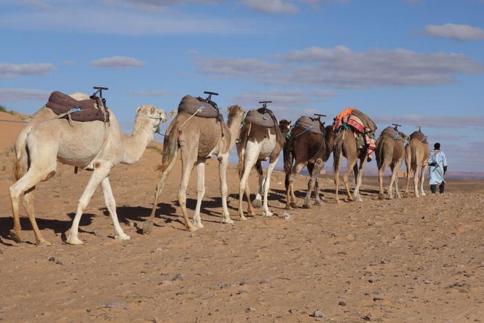 Morocco Trek Merzouga, Auberge Café du Sud