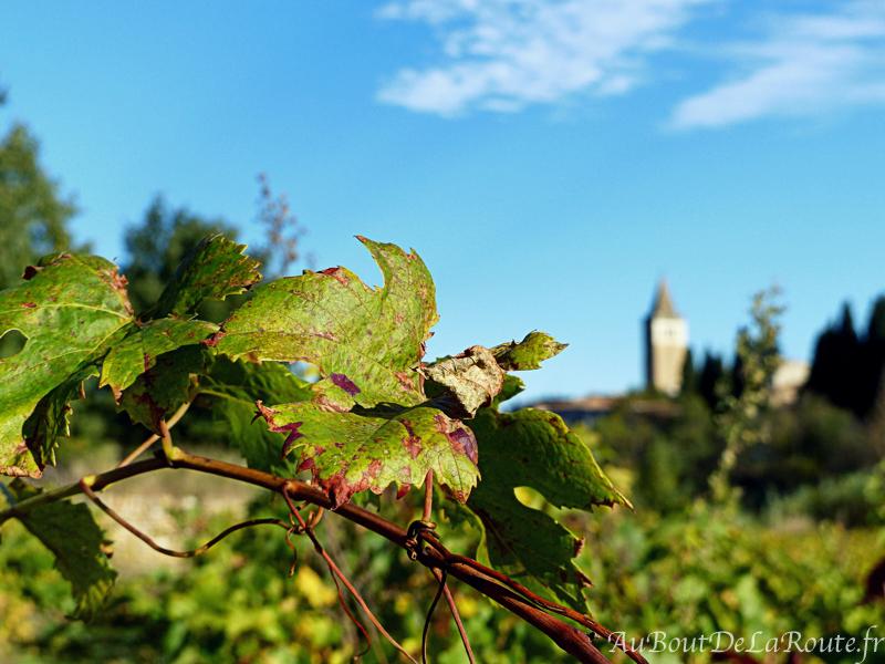 Vignoble des Corbières