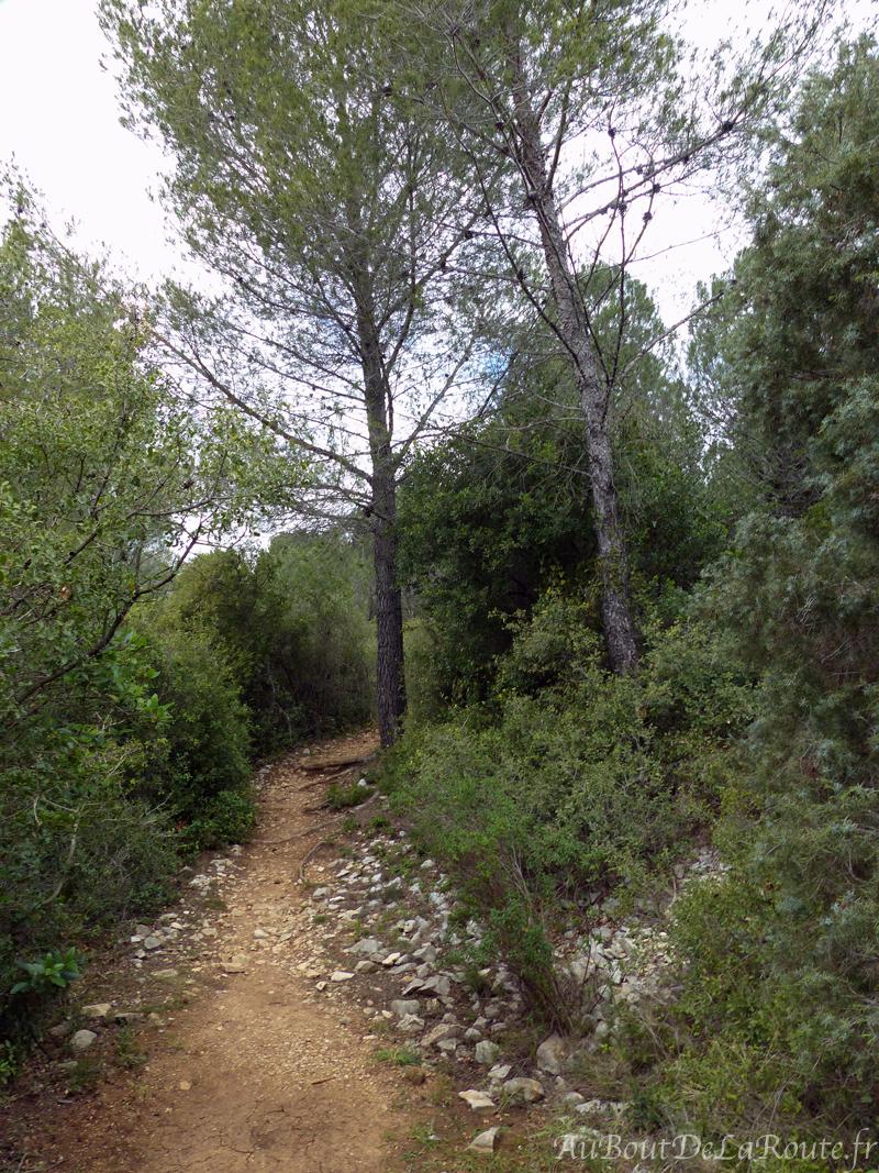 Sentier Pinede