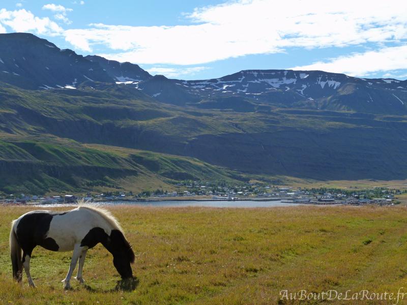 Cheval face à Seyðisfjörður