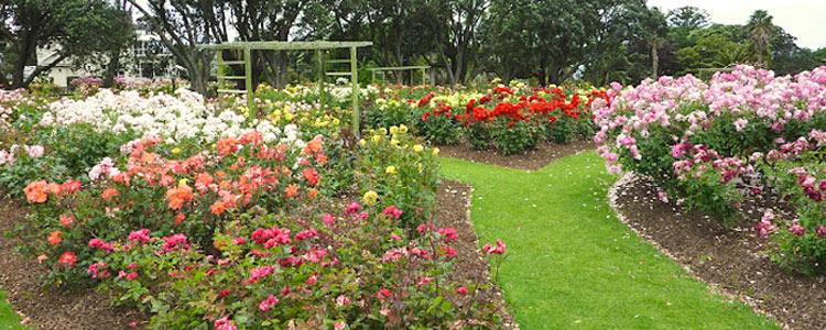 Parnell Rose Gardens for an Auckland Wedding