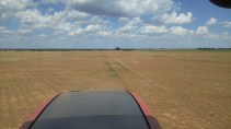 Grass left in the sprayer tracks