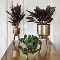 Mid-Century Brass Planter with Stand | Nordal | Audenza