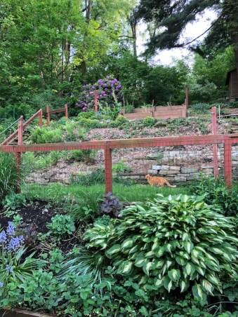 David Walton's garden
