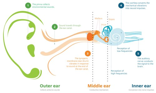 small resolution of the human ear consists of three parts the outer middle and inner ear