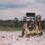 Cine independiente inédito en Madrid, al aire libre en la segunda edición de Cineplaza de verano