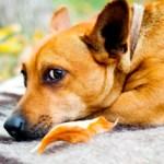 Las protectoras recogen en España un animal cada cinco minutos