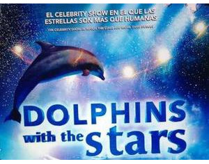 Dolphins with the stars h