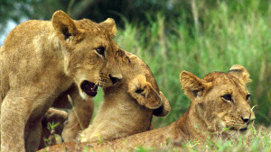 Gorongosa Nat Geo Wild