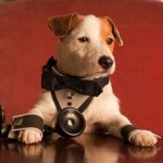 La película sobre el perro 'Pancho', que dirige Tom Fernández, comienza a rodarse en Madrid