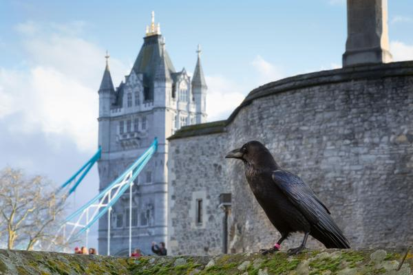 tower of london # 80