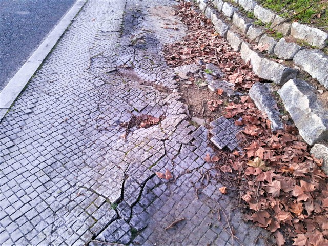 Wurzeln zerstören Fußwegen