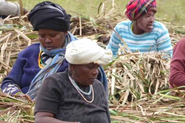 Suedafrika-Bulungula-Xhosa-Frauen-Feld