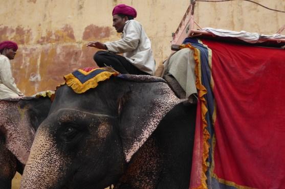 Indien_Jaipur_Amber_Elefanten