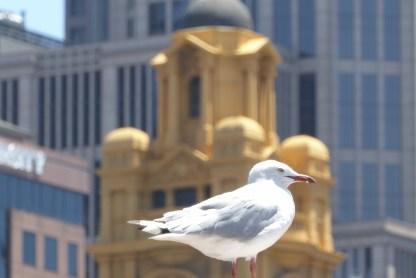 Australien-Melbourne-Southbank-Moewe