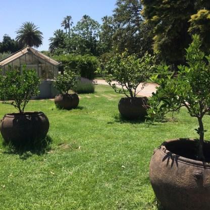 Australien-Melbourne-StKilda-BotanischerGarten-Topf