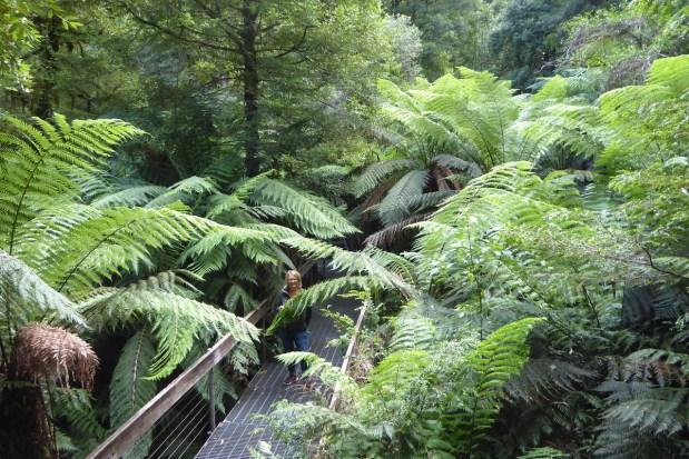 Australien-YarraValley-Baumwipfelpfad
