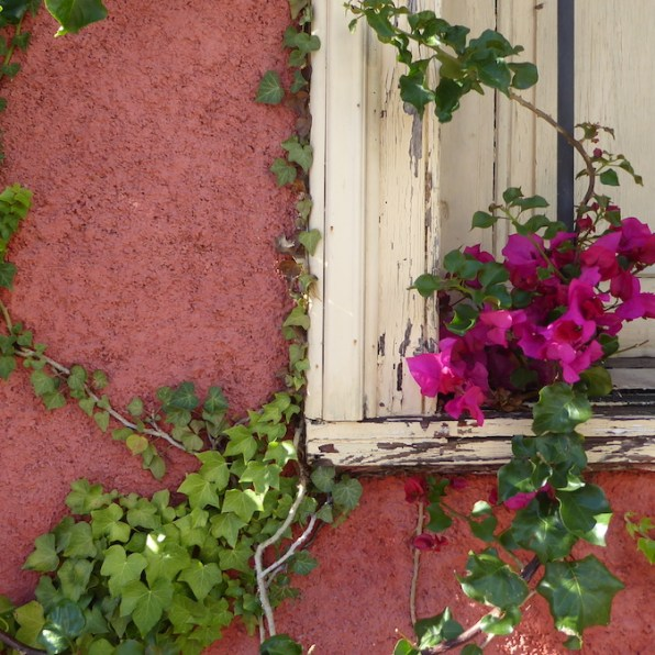 Chile-Valparaiso-Haus-Blume